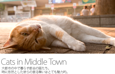 Cats in Middle Town